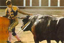 bullfight in Granada